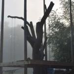 drvo-pretvoreno-u-kucu