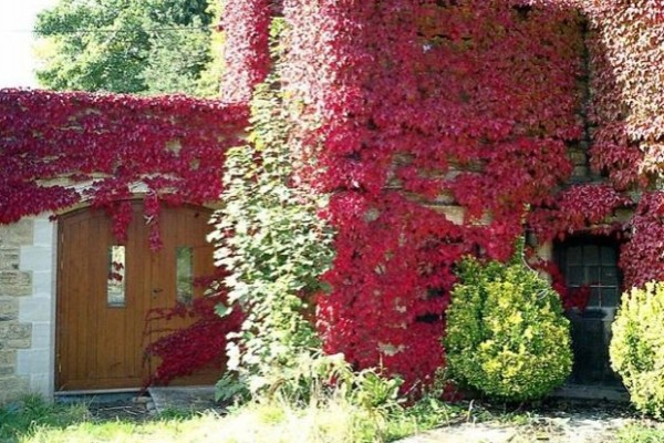 Svi bih je poželji ovakvu. Uredite i vi svoju jesenju baštu  KucaSnova.com