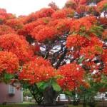 DIVNO: Najljepša stabla na svijetu (FOTO)