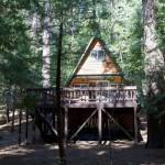 Kuća u šumi. 10