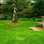 trava-dvoriste (1)