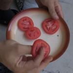 sadnja-paradajza