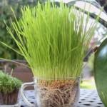 biljke-rast