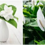Biljke-za-kvalitetniji-san