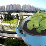 uzgajanje-balkon