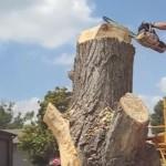 drvo-umjetnicko-djelo