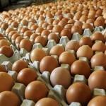 Ovo je genijalni trik sa jajima – od sada vas niko neće moći prevariti!