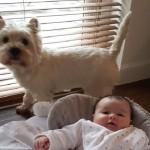 Porodica je dobila bebu pa odlučila psu urediti vlastitu sobu ispod stepenica, rezultat će vas iznenaditi