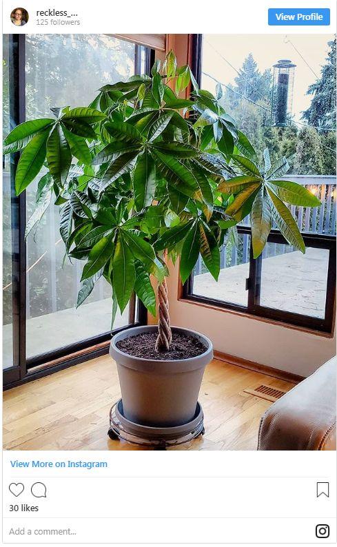 biljke (2)