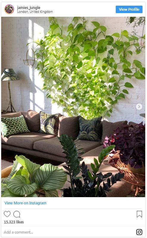 biljke (3)