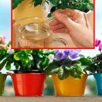 Da vaše biljke cvjetaju dugo i bogato: Bujno cvjetanje i lijepo lišće omogućiće nam OVAJ rastvor
